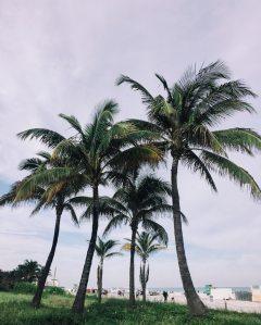05-31-19 North Miami Beach 2