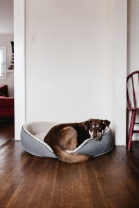 Keeping Your House Clean with Dogs While It's on the Market